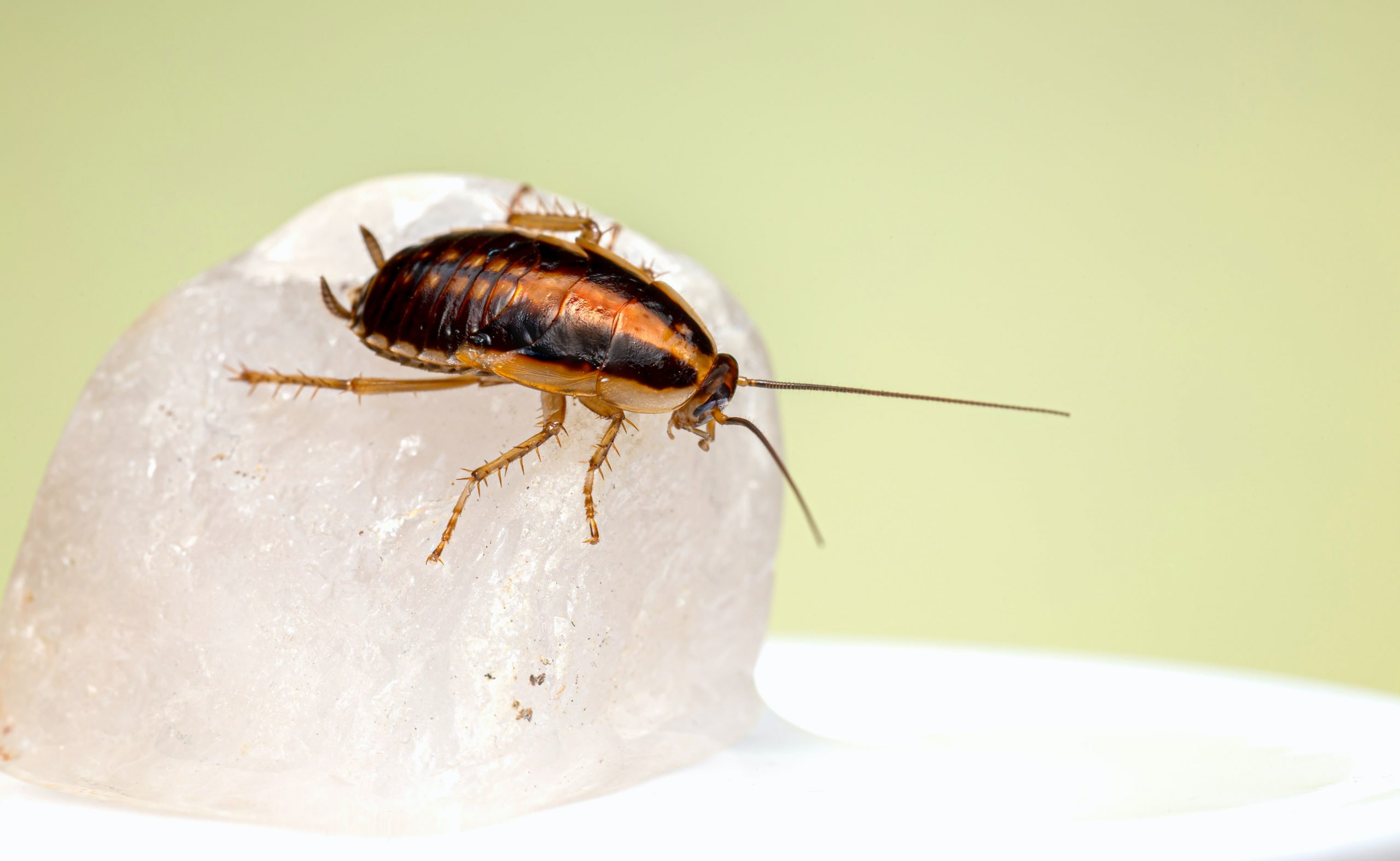 The Gift of the Cockroach